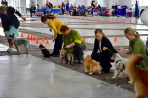 Photo of several IABCA event participants and small dogs